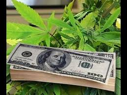 Useful Points to Consider for New Investors in Marijuana Penny Stocks