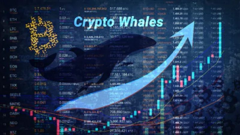 Glassnode Reports Surge In Bitcoin Whale Accounts